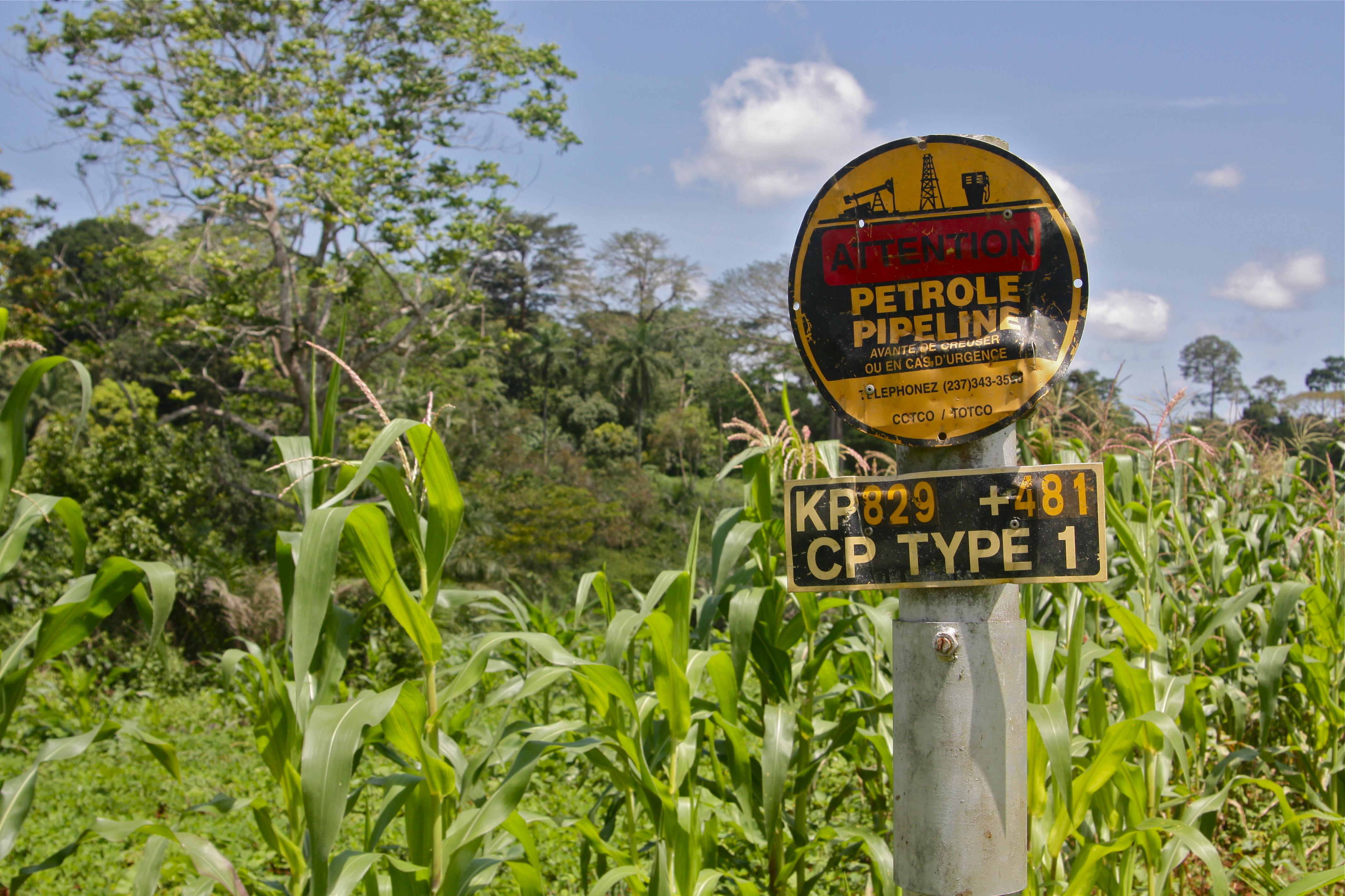 pipeline_cornfield